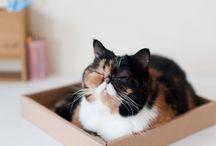 Katzen im Karton