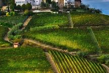 Piedmont, Langhe, Roero e Monferrato