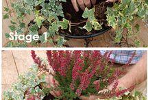 Baskets and pot plants