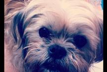 Sweet Miss MIrtilla Fullalove / Mirtilla, superstar doggie :)