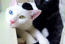 Cats)