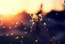 dandelion passion