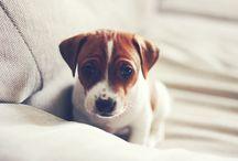 Adorable Doggies / by Linda Valenzano