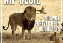 In Honour of Cecil the Lion