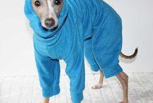 Chili & Lola / Italian greyhound