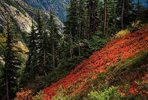 North Cascades / This is the North Cascades, a mountainous land with more than 2.5 million acres of pristine wilderness stretching from the Canadian border to the foothills of Mt. Rainier.