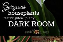 Растения для верт сада темн
