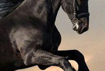 Horses♥♥♥