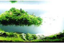 Aquascaping / Prachtige landschappen onder water. Creativiteit is het sleutelwoord!