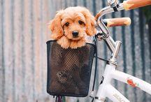 Men & Puppies