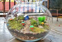 Taman kecil terarium
