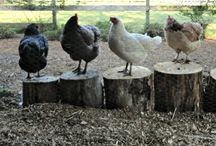 chicken run ideas