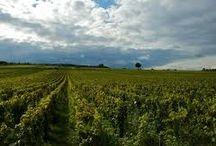 Puligny Montrachet - Domaine Jean Chartron / Visite du vignoble et des chais au Domaine Jean Chartron à Puligny Montrachet à en Bourgogne Réservez avec winetourbooking.com