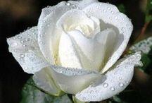 Color-White