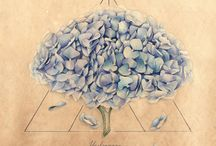 Alchemical flowers / watercolor illustration by Elena Limkina