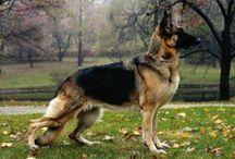 Dream Dog / by Susan Hawk Prysock