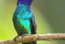 birds / They have colourful wings and they have stolen our heart and make us laugh sometimes!