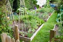 Veg Patch and Garden