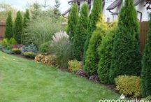 záhrada pri plote
