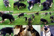 My dogs <3  Suss