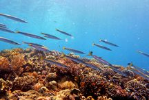 Underwater Photography / A selection of the best underwater HD photos nearby our resort