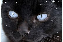 "Cats Eye / ""Nature breaks through the eyes of the cat."" -Irish Proverb / by Melissa Philbrook"