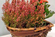Online Ανθοπωλείο | Προϊόντα λουλουδιών, flowershop Athens Greece / Βρείτε στο online ανθοπωλείο μας http://shop.anaisdecor.gr πάνω από 500 προϊόντα σε συνθέσεις λουλουδιών, μπουκέτα, ανθοδέσμες, συνθέσεις LOVE4U και φυτά.
