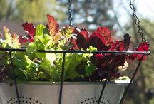 Hanging Baskets for Flowers and Veggies / by Nina (McMullen ) Harrison