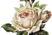 Flores (decoupage)