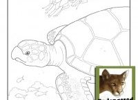 Endangered Animals Coloring Book / by Ultimate Paper Mache