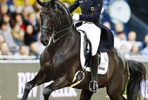 Dressage / Appreciation of beautiful dressage horses and their riders. www.chapelstone.co.uk
