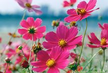 Flowers & Plants / Beauty - whether cultivated in a garden or wild in a field. / by Judith Hindall