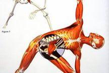 Psoas Muscle/ Balance