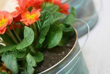 flori si alte vase