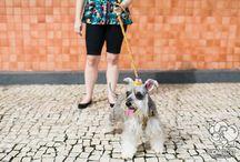 Photography pet / Fotografias dos pets e seus donos