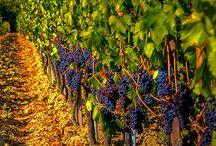Wine selection / Taste life