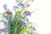 цветы-акварель