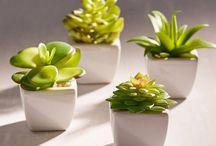 Adornos botánicos cute