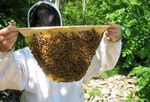Learning Beekeeping