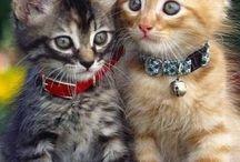 Koty domowe