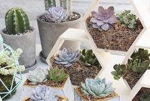 Succulent theme wedding