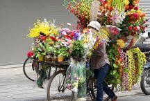 Bike baskets and ? / by Rosetta Bennett