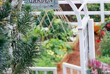 Gardens / by Natalie Malan