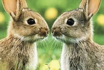 Love rabbits