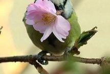 Uccellini primavera