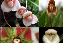 Orchids / Orchids