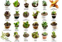 Plantas e cactos