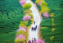 cest.Čína