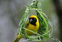 BIRDS / by Princess Wiltedflower