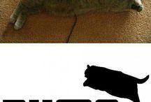 CAT - kocky / foto koček